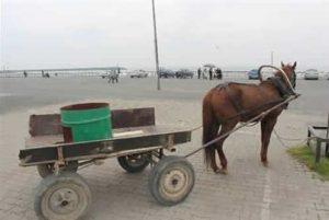 Motorsuz Arabaların Güç Sağladığı Hayvan Türleri Nelerdir?